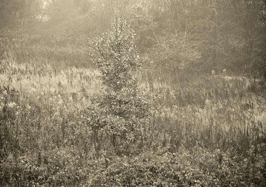 November light by Jerry Daniel
