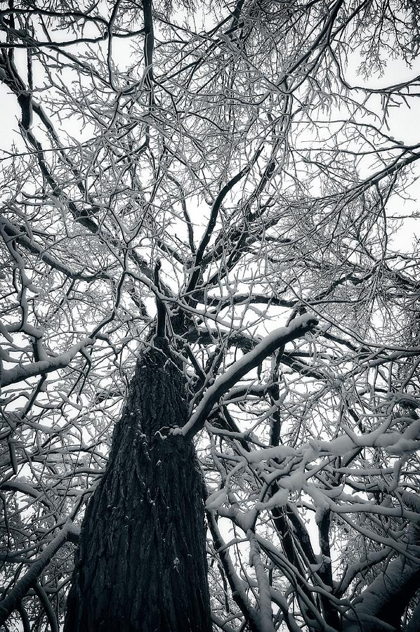 November Snow by Miguel Winterpacht