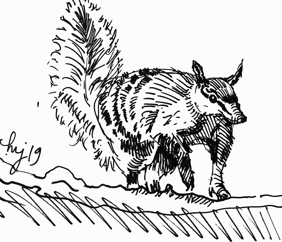 numbat noombat walpurti drawing by Mike Jory
