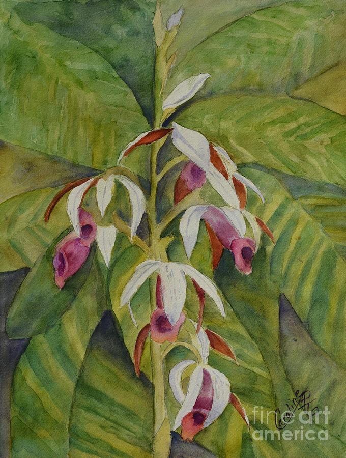 Nuns Orchid  by Caroline Harris