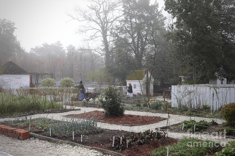 Nursery Garden on a Misty Morning by Rachel Morrison