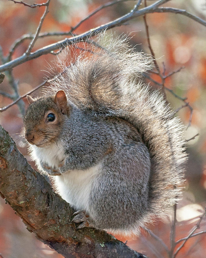 Nuts for Autumn by Lara Ellis