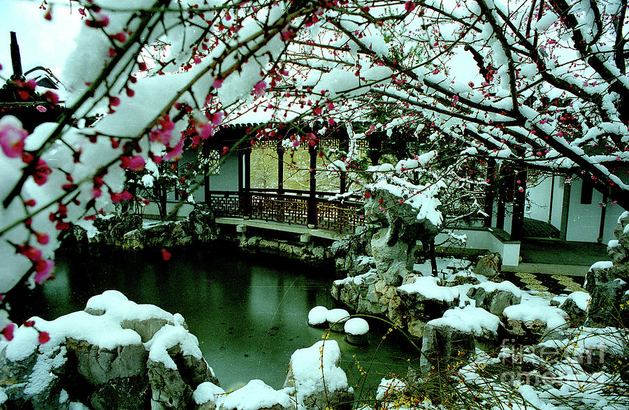 Spring Snow Photograph - Ny Chinese Scholars Garden, Spring Snow by Anthony Butera