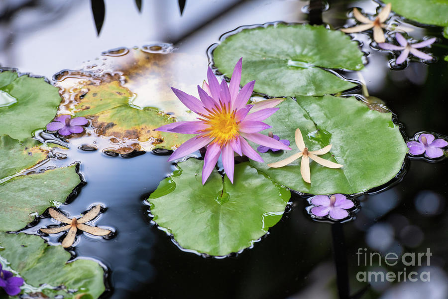 Nymphaea robert strawn selective focus landscape by Tim Gainey