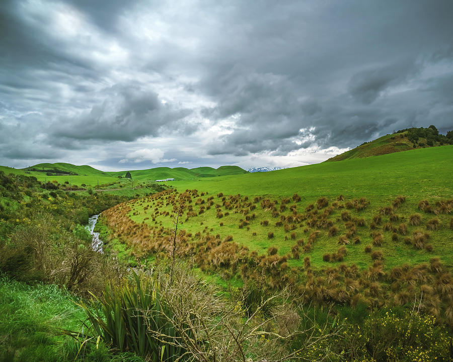 NZ Countryside by Nisah Cheatham