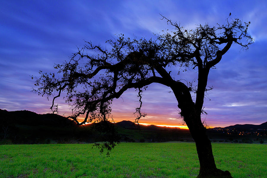 Oak at Sunset by John Rodrigues