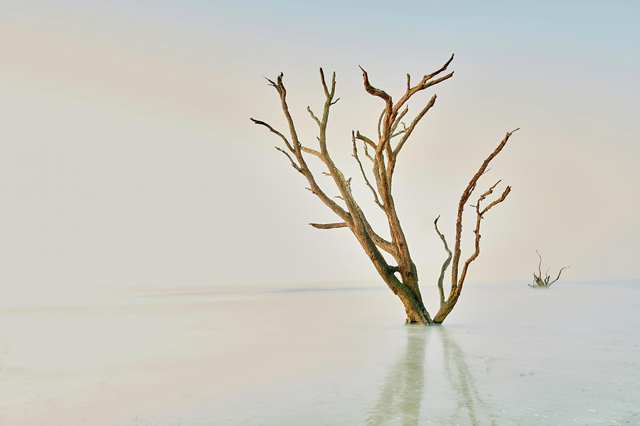 Oak in the Ocean by Jon Glaser