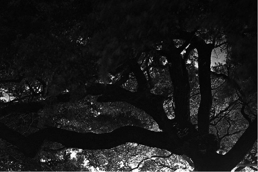 Oak Photograph - Oak Tree At Night by Edward Swearingen