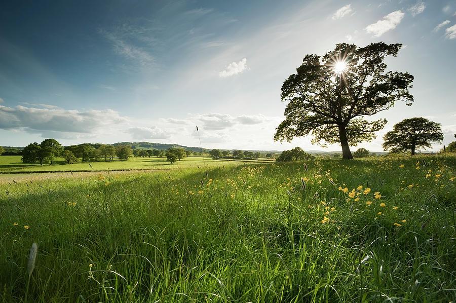 Oak Tree Photograph by Jeremy Walker