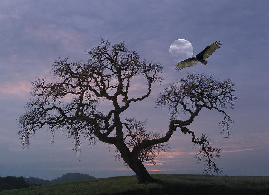 Oak Tree Silhouetted Against Cloudy Photograph by Diane Miller