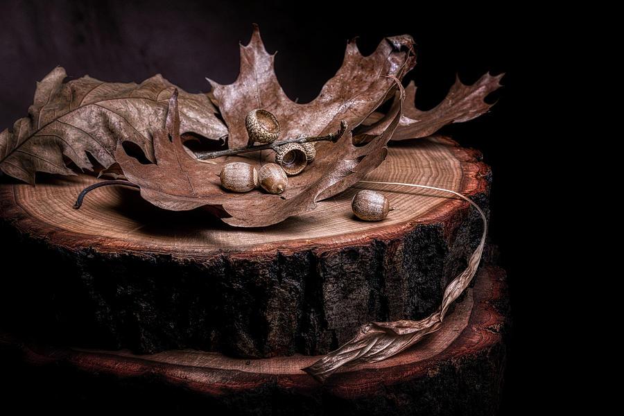Acorn Photograph - Oak Tree Still Life by Tom Mc Nemar