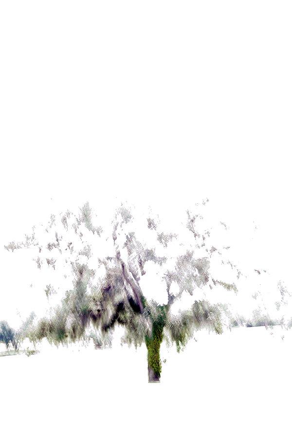 Oak Tree Photograph by Win-initiative