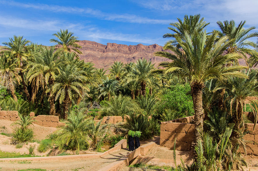 Oasis Around Ouled Atmane Kasbah Photograph by Maremagnum