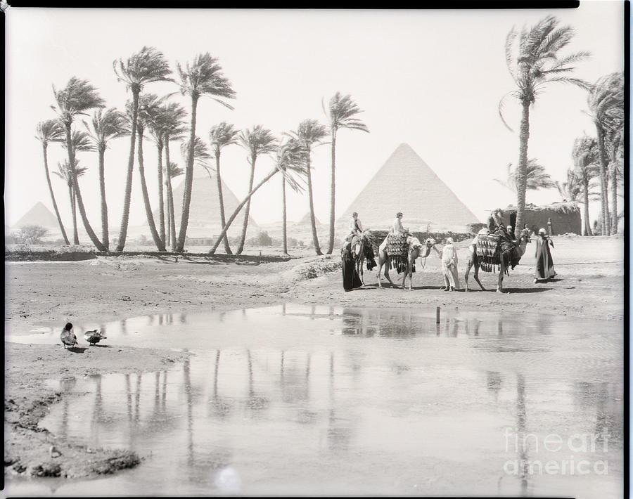 Oasis At Giza Photograph by Bettmann