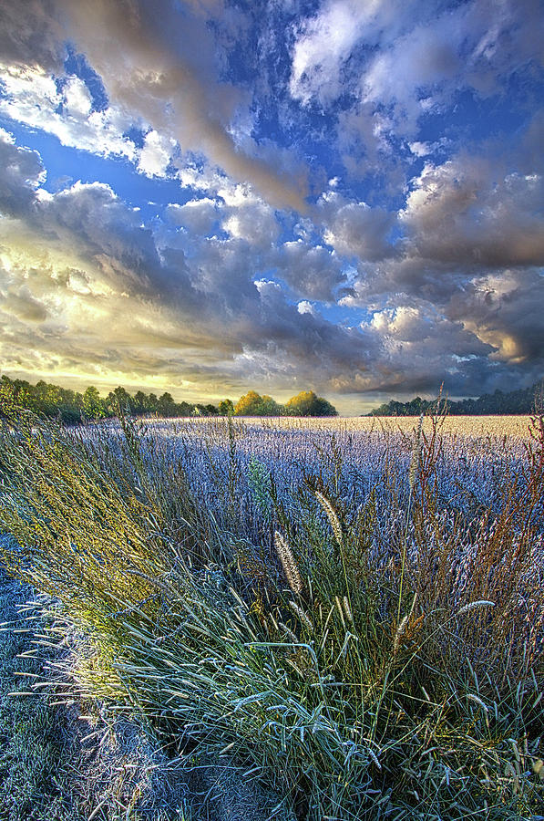 Life Photograph - Obscuring Summers Memory by Phil Koch