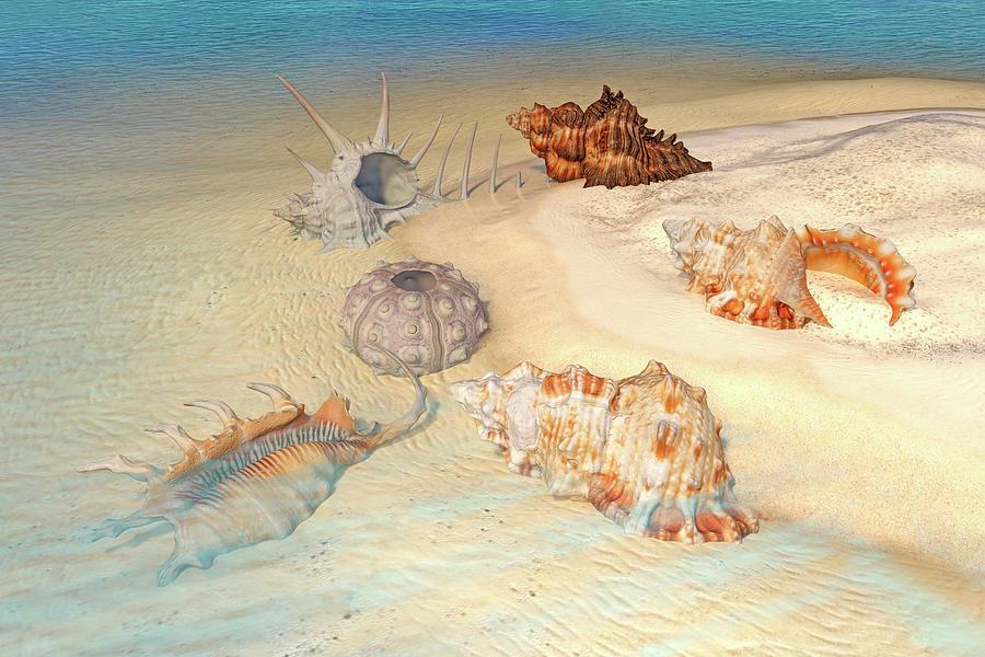 Shell Digital Art - Ocean Shells by Betsy Knapp