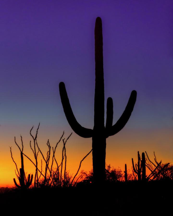 Ocotillo And Saguaro Sunset Photograph