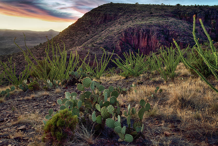 Ocotillo Cactus Canyons at Sunset in Arizona by Dave Dilli