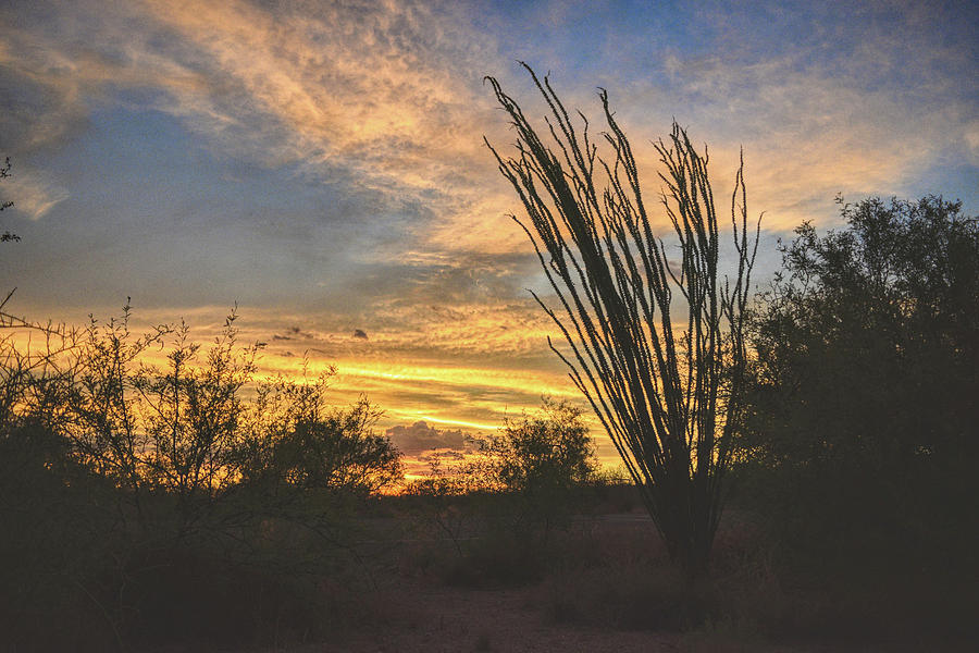 Ocotillo Sunset by Chance Kafka