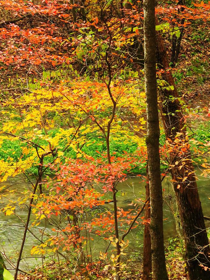October Colors  by Lori Frisch