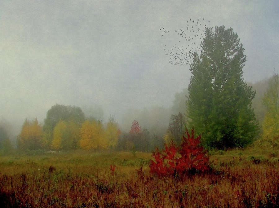 October Morn by Maggie Terlecki