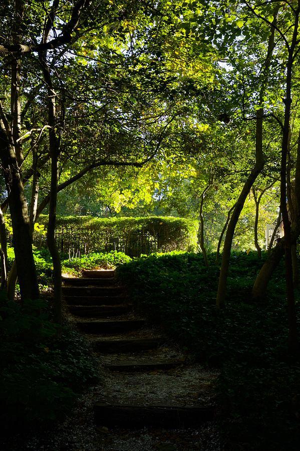 October Morning Garden Steps by Rachel Morrison