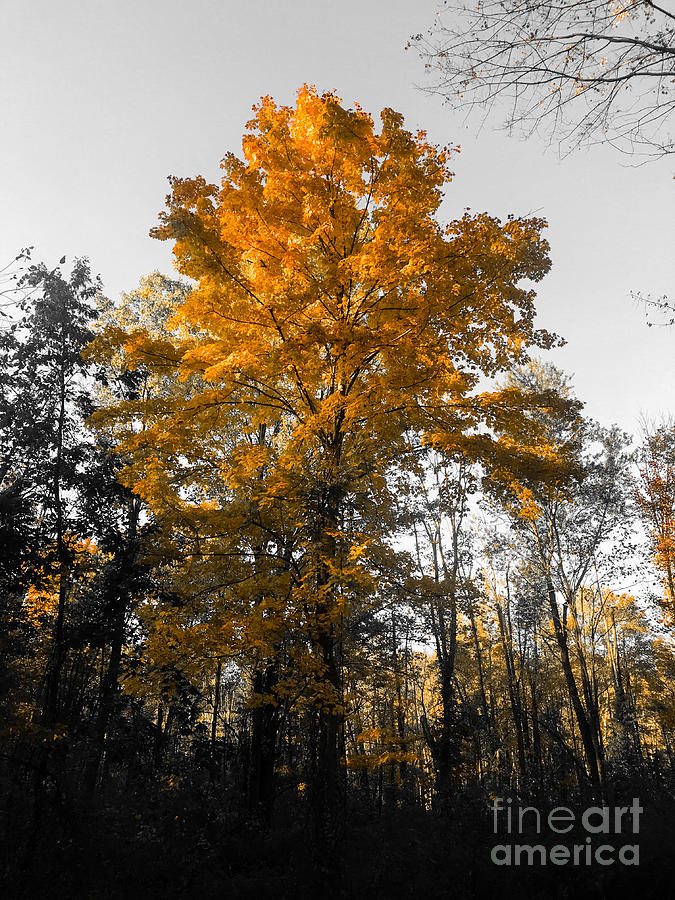 October Orange Photograph