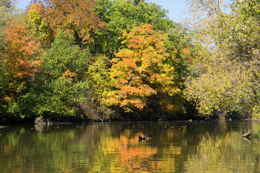 October Reflections by Randall Saltys