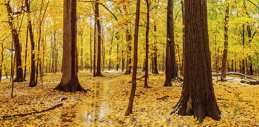 October Snow Thatcher Woods by Todd Bannor