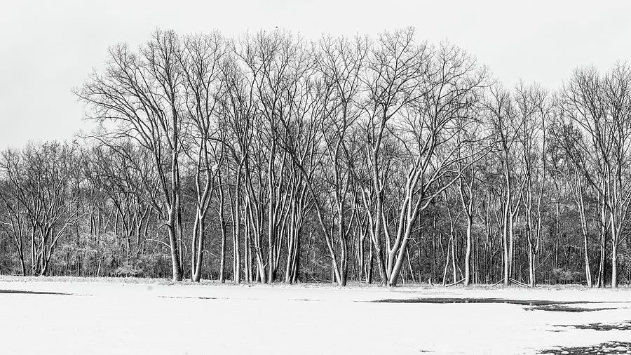 October Treeline by Miguel Winterpacht