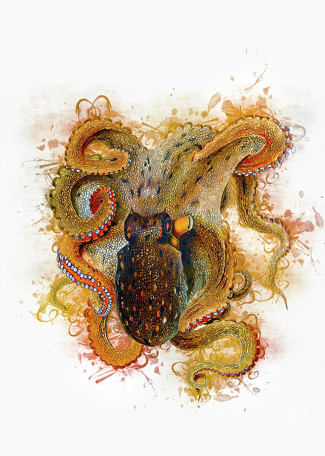 Octopus by Ian Mitchell