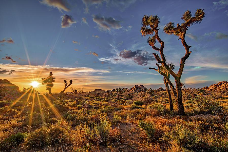 Of Sunstars And Joshua Trees Photograph