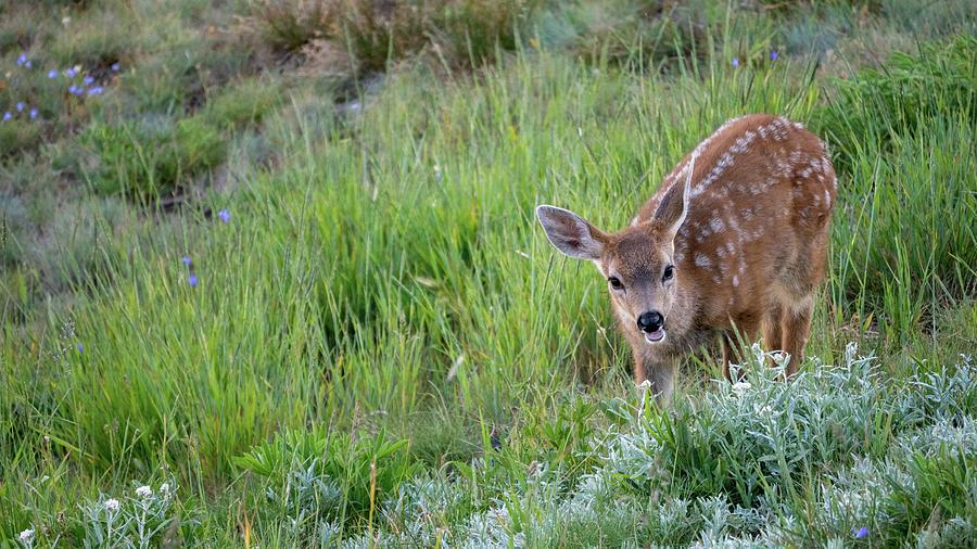 Oh Deer by Kyle Lee