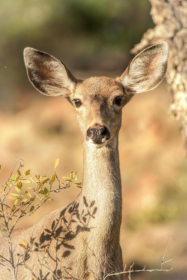 Oh Deer - Vertical 01071 Photograph