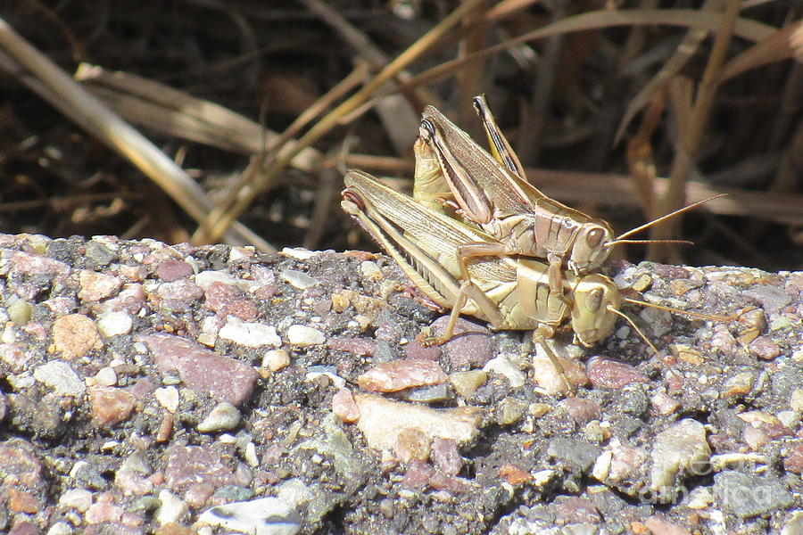 Oh Grasshopper by Marie Neder