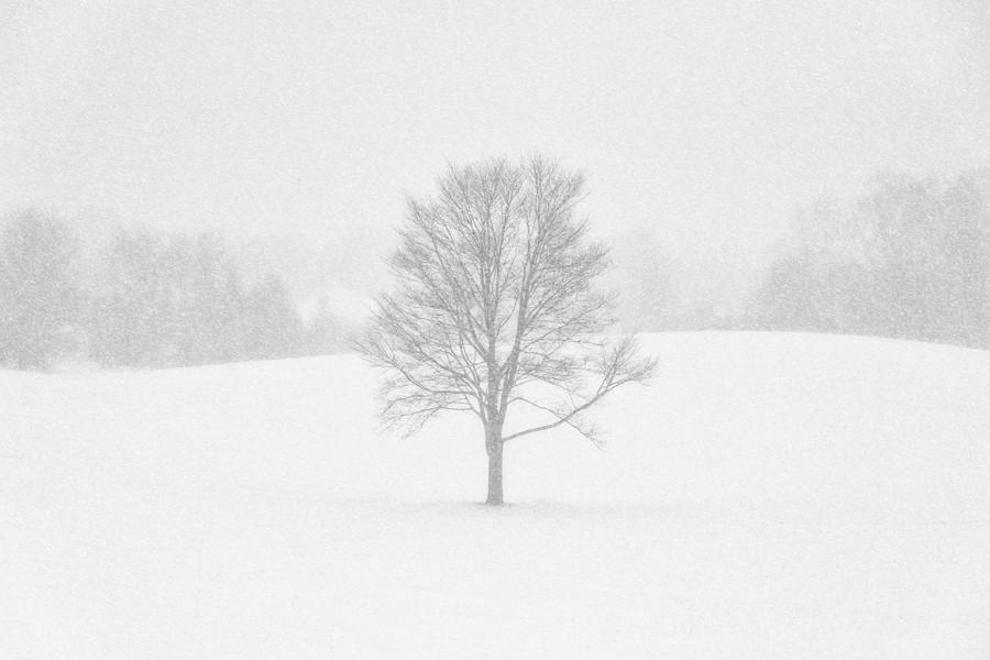Ohio Winter Whiteout 1 by Matt Hammerstein