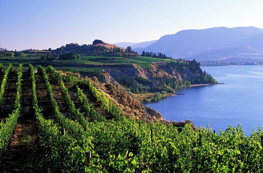 Okanagan Vineyards Winery Scenic Photograph by Laughingmango