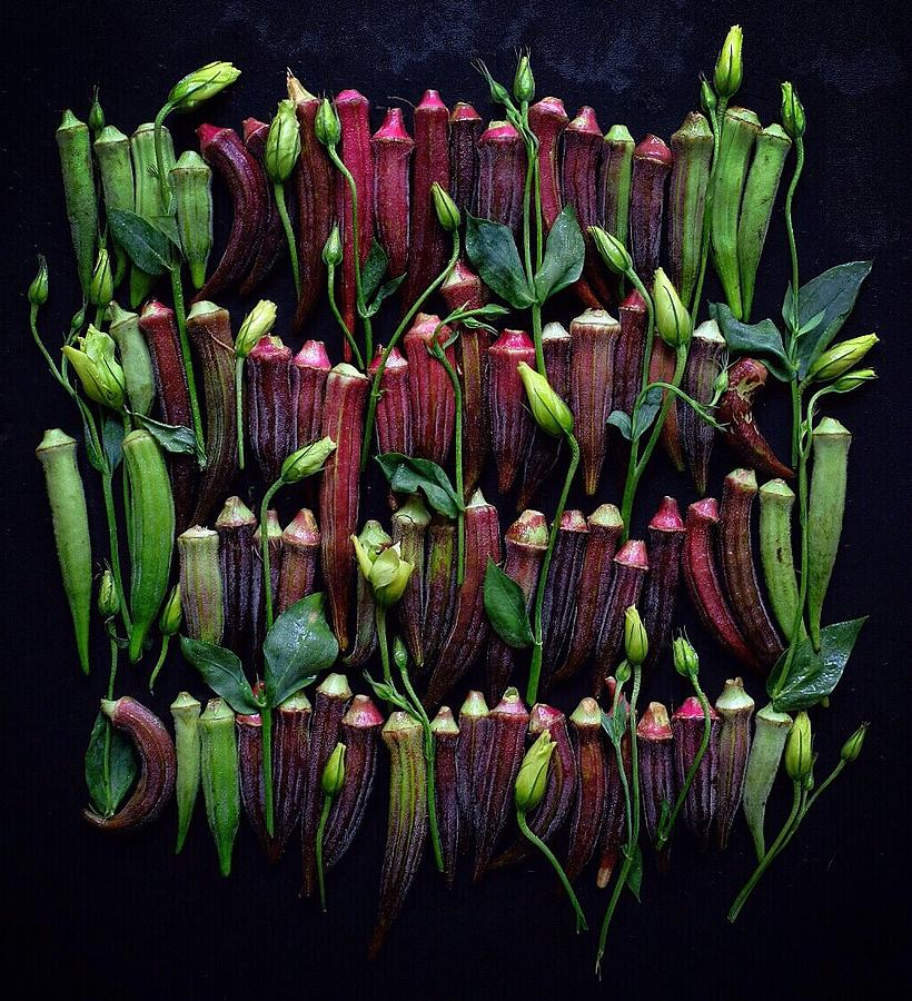 Okra Colors by Sarah Phillips