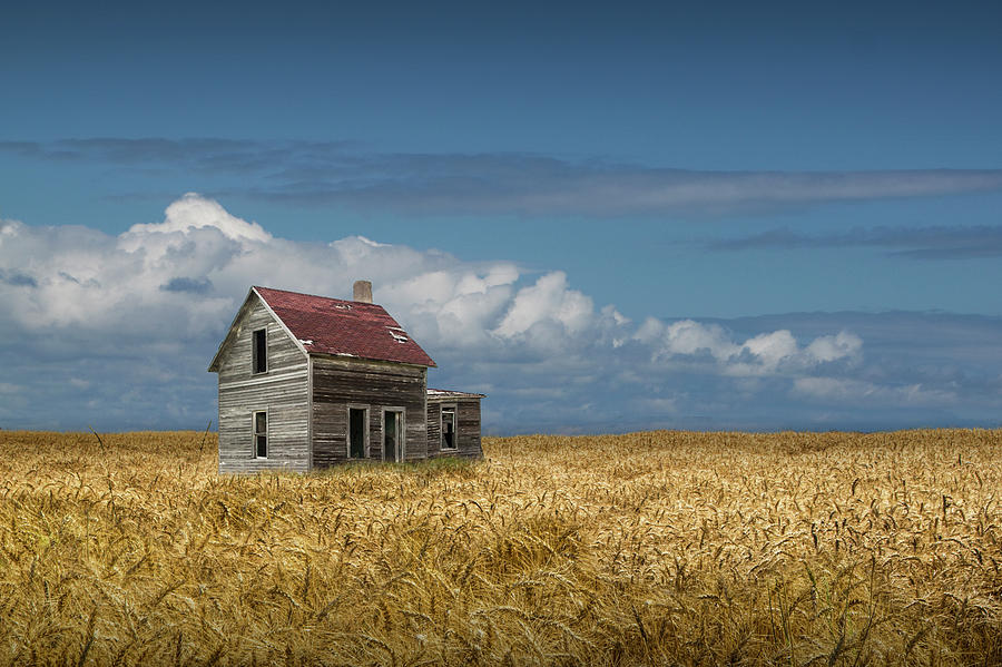 Old Abandoned Prairie Farm House in a Wheat Field by Randall Nyhof
