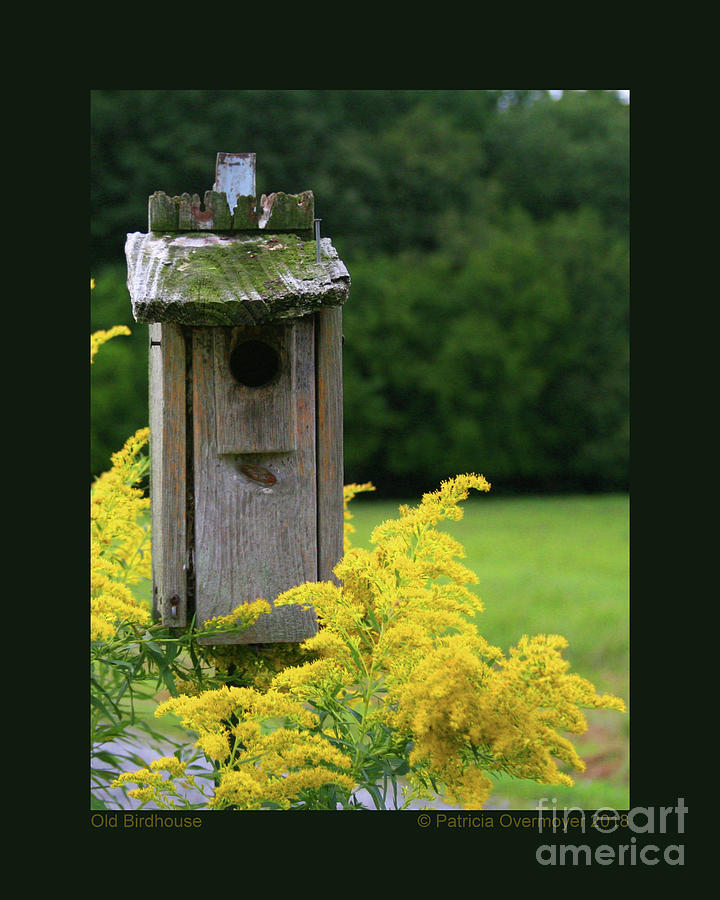 Old Birdhouse by Patricia Overmoyer