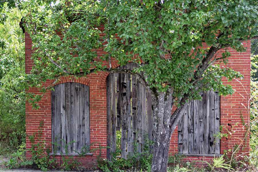 Old Brick Building Behind Tree by Randy Bayne