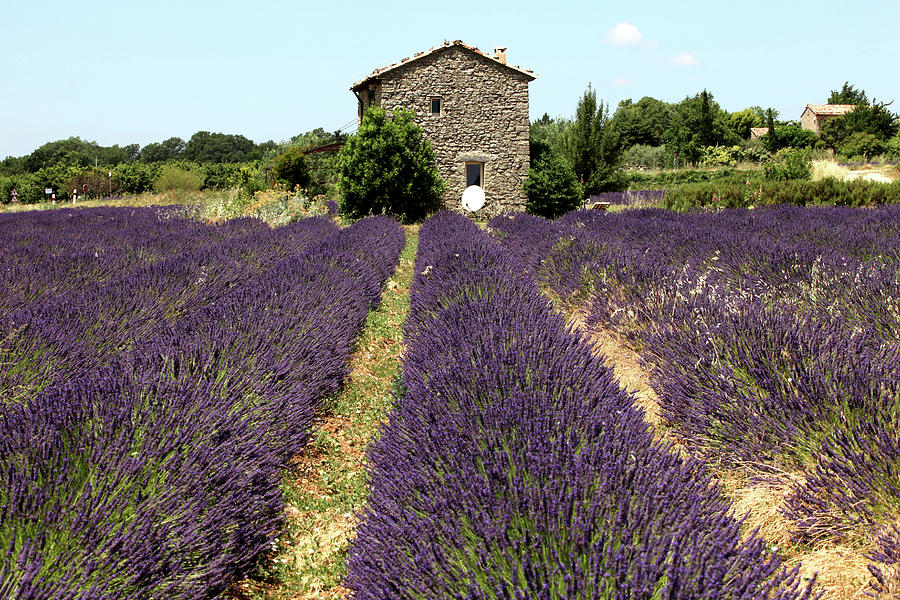 Old Farmhouse In Provence With Lavender Photograph by Choja