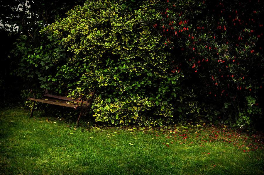 Vintage Garden Bench Photograph