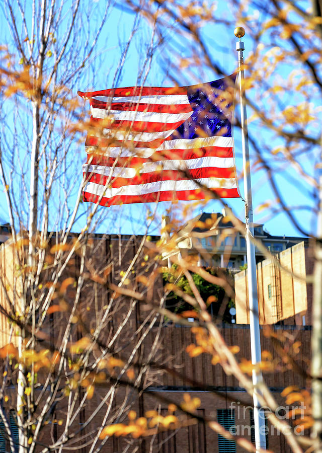 Old Glory through the Trees by John Rizzuto