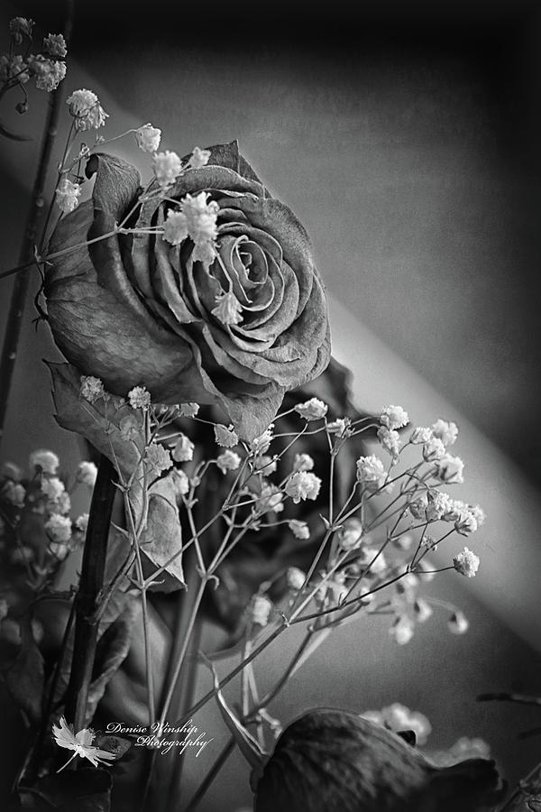 Old Love Never Dies - Black and White by Denise Winship