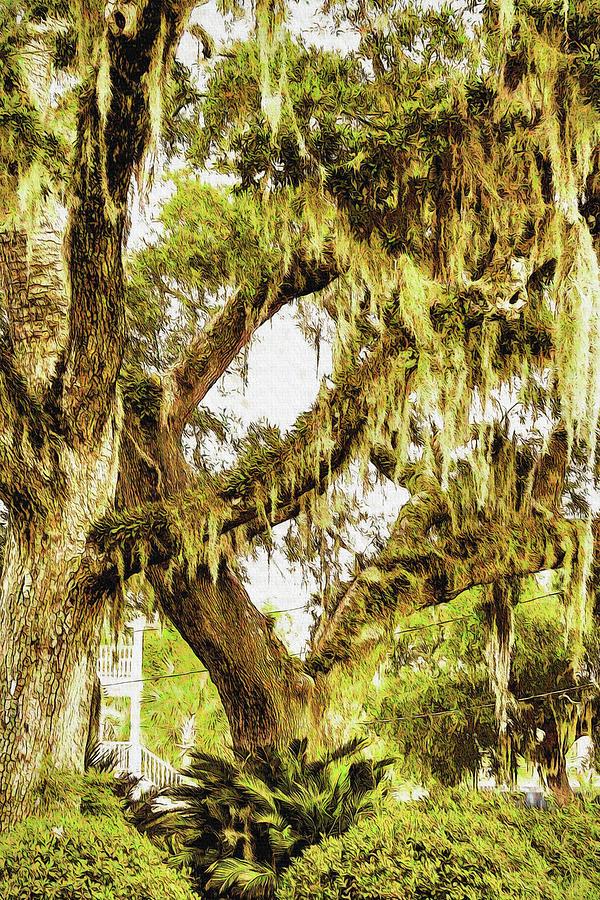 Old Mossy Oaks by Barry Jones