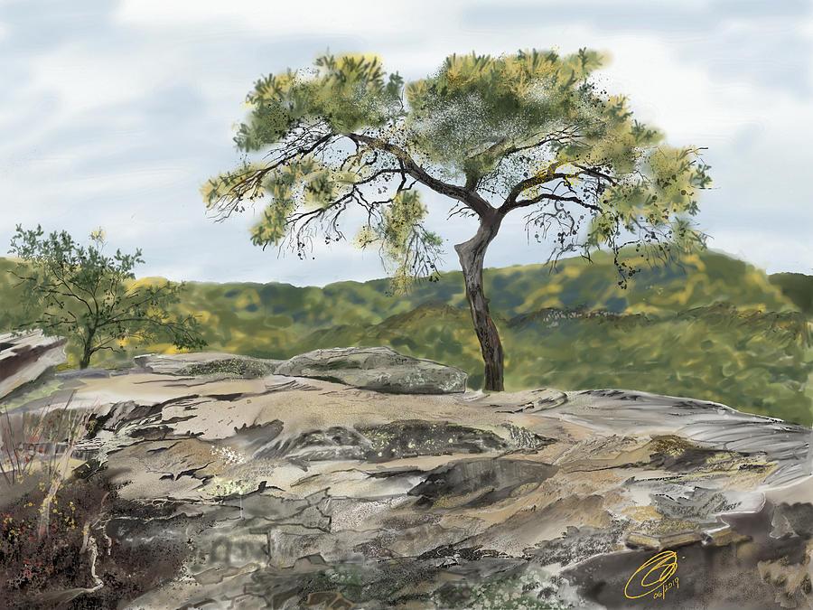 Old Pine at Buzzards Roost by Joel Deutsch