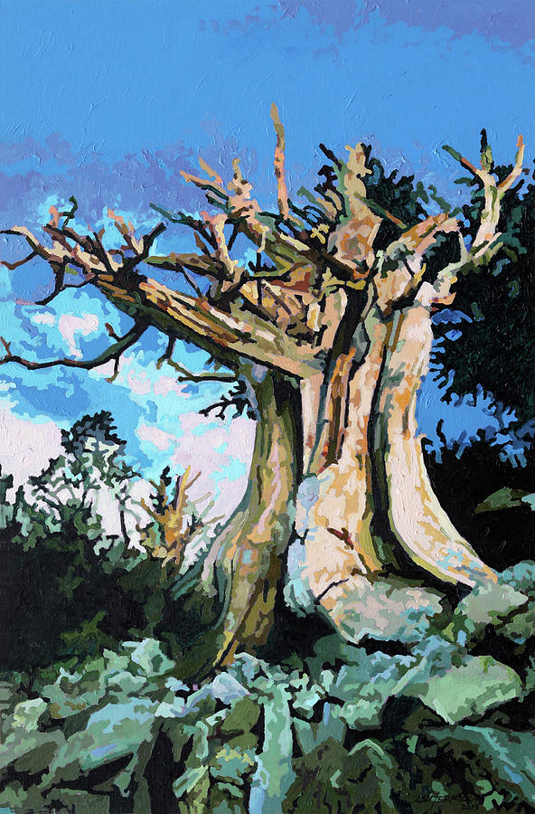 Pine Tree Painting - Old Pine Tree by John Lautermilch