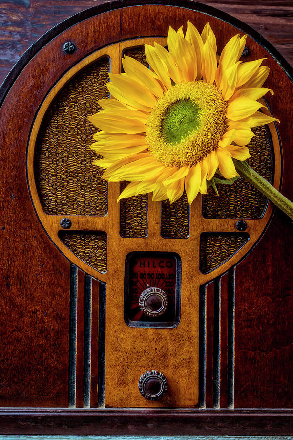 Old Photograph - Old Radio And Sunflower by Garry Gay