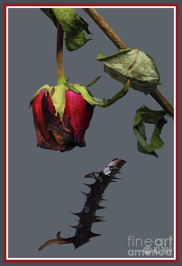 Rose Digital Art - Old Red 2 by Klaus Jaritz